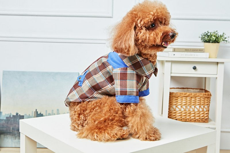 [Duke of Mao] pet clothes stitching check shirt