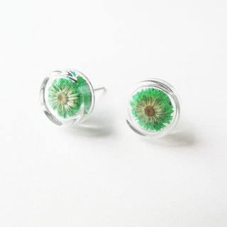 * Rosy Garden * Dried flowers green Anaphalis sinica round glass earring