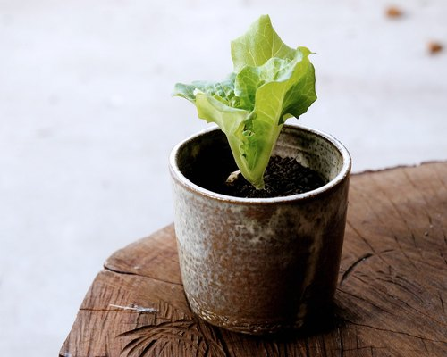 No.04 edible vegetables ceramic planting pot