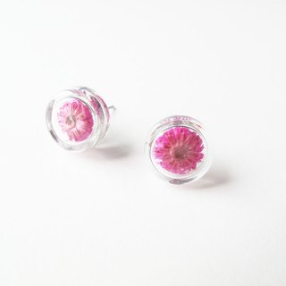 * Rosy Garden * Dried flowers deep pink Anaphalis sinica round glass earring