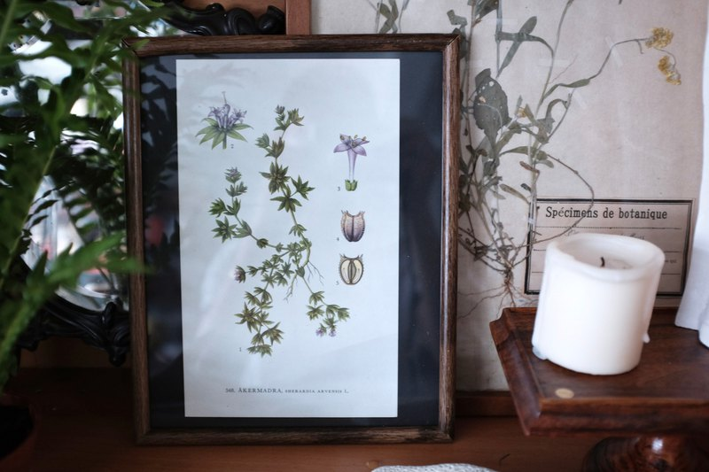 Vintage Nordic Flower and Plants Picture Frame - Snowy Grass
