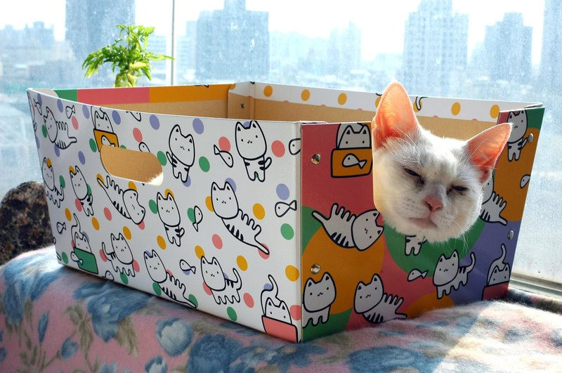 cat cat cat pet box box carton vibrant