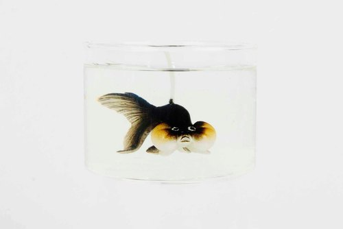Bubble eye goldfish candle - Black