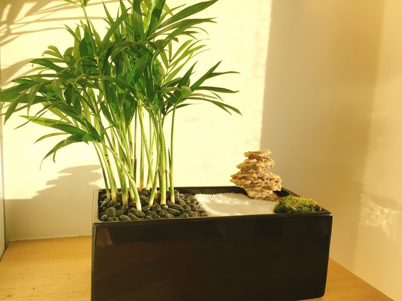 Pure natural Japanese Zen potted Zen monastic black black potted plants stone moss potted gifts zen