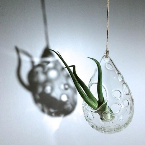 - Foam drops - vase for air plants