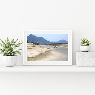 Limited rabbit photography art original - toward Chongshan
