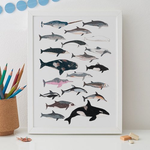 CETACEAN PRINT - WHALES AND DOLPHINS