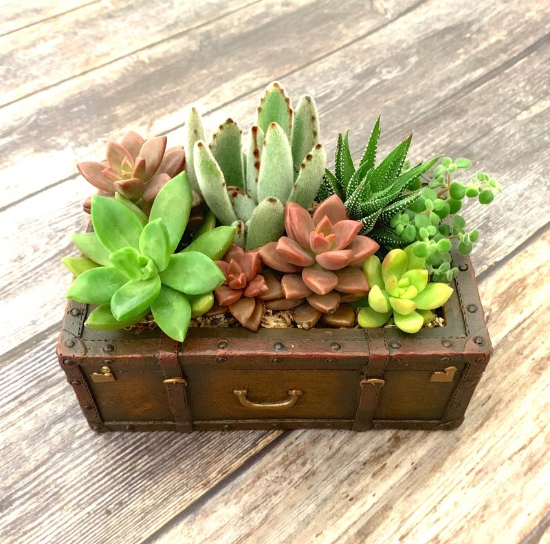 [Pot plant] meaty box retro suitcase meat group pottery system / gift treatment headdress graduation gift