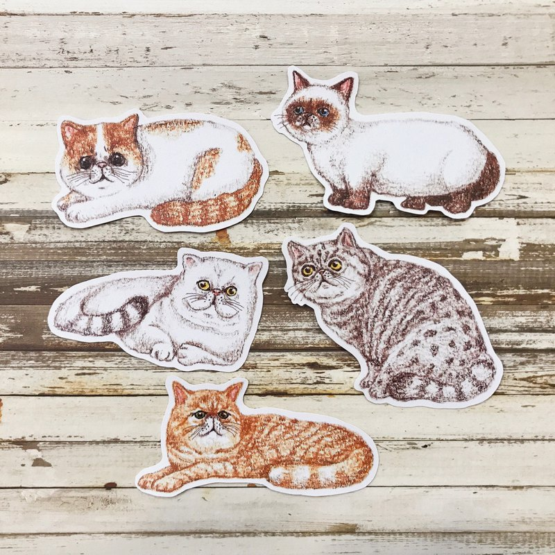 Color pencil hand drawn flat face cat waterproof sticker set 5 into