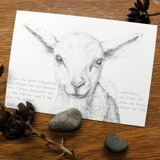 Ovis aries sketching postcard