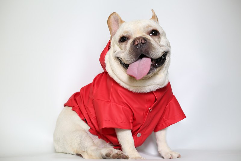 Hooded Raincoat for Dog, Red