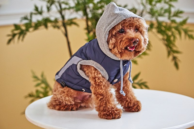 [Duke of Mao] pet clothes hooded windproof cotton vest blue