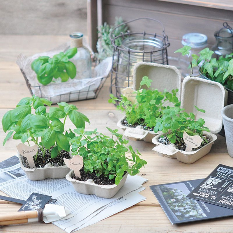 【ECO】Bird & Garden Bird and Flower Plant Cultivation Set (Biodegradable Paper Box)