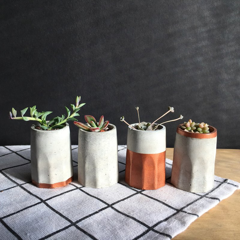 Make a cup of meat. Succulent plant potted plants. Red copper gold loaded four into the group