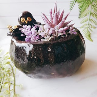 P-28 Wen Qingying│Yoshino Hawk x Owl Pottery Flower Pure Handmade Design Succulent Healing Cute Unique Gift