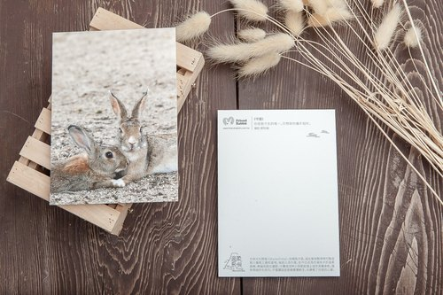 "Rabbit Photography Postcard - ""Guardian"""