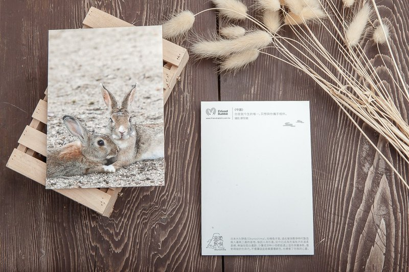 Rabbit Photography Postcard - Guardian