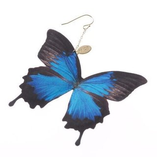 Earrings Papilio Ulysses