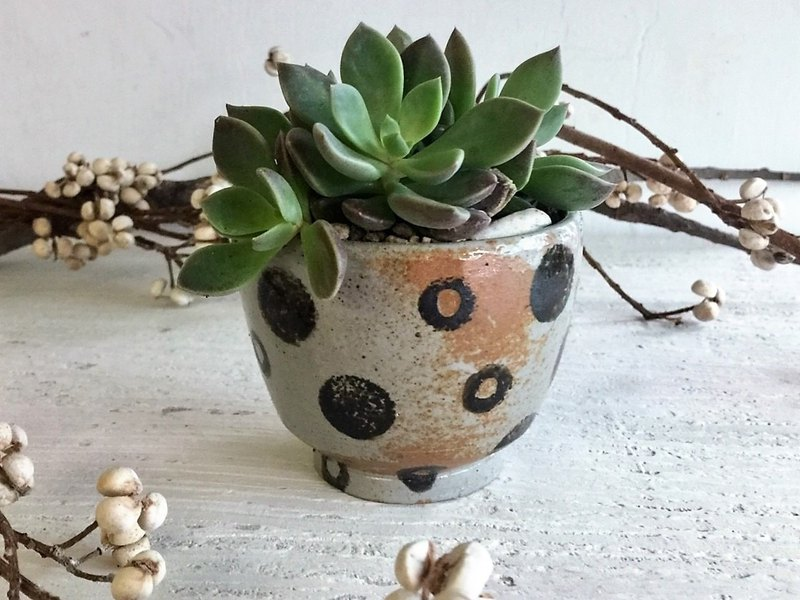 Dots. Origin _ pottery potted potted plants
