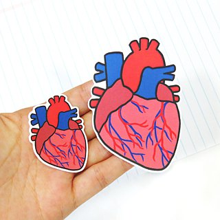 """Lifelong Learning Series"" - Anatomical heart sticker (Large)"
