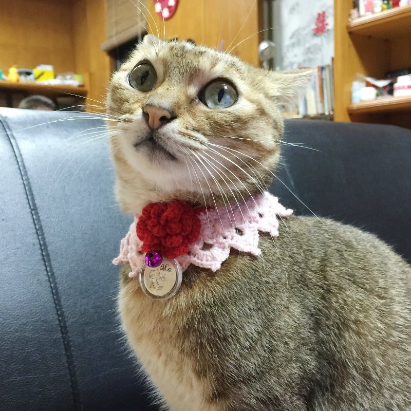 Temperament lace cat collar