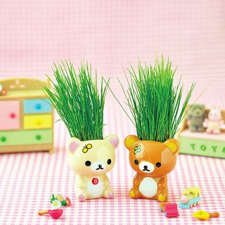 [Rilakkuma Lala Bear Family] styling egg potted plant / ryegrass