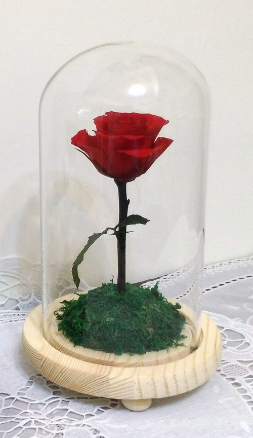 l Star Pride roses with glass cover flower ceremony l*Little Prince*Valentine*love*decoration*non-withered flower. star flower. immortal flower*exchange gifts